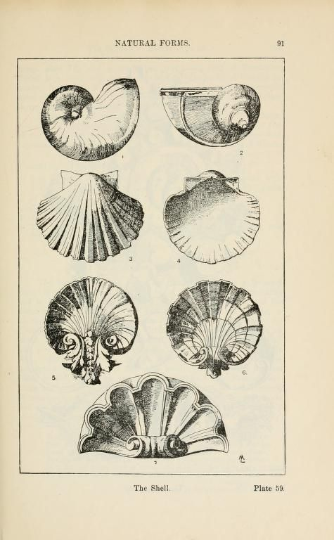 Shell shapes for Architecture and Design - Rococo fundamental form - A handbook of ornament; Print
