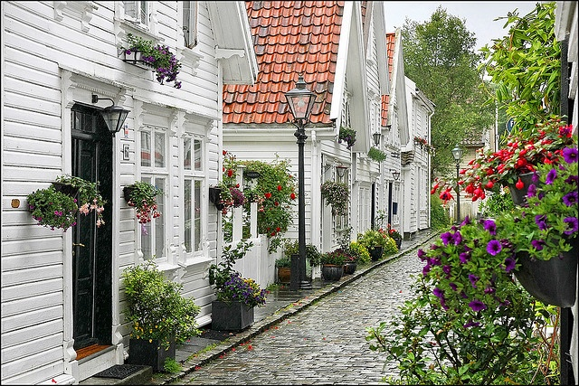 Old Stavanger, Norway after rain. Old brick streets, white houses, and abundant flowers - so quaint!