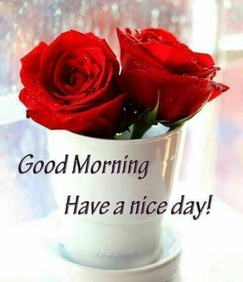 Good Morning Quotes With Roses : Best good morning images on pinterest