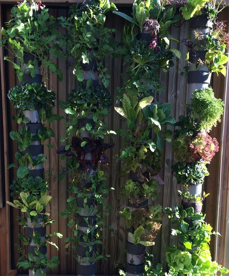 http://consocollaborative.com/article/avec-lagriculture-verticale-on-peut-faire-pousser-400-salades-par-an-sur-un-petit-balcon/