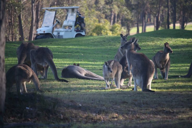 Golf courses in Australia are often home to lots of critters. Just another challenge.  😀😀