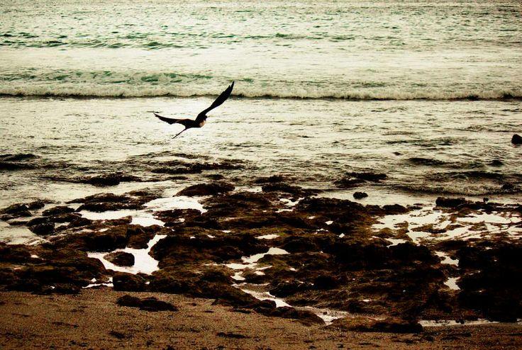 Ave y Cielo de Mar Foto: Ginna Álvarez