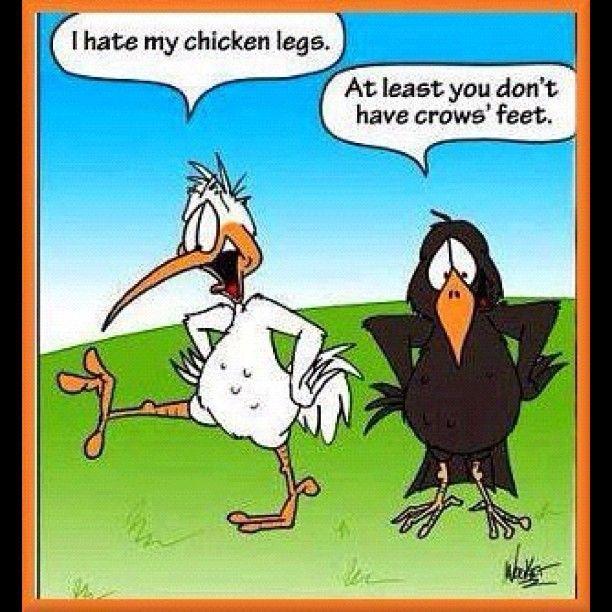 Some chicken humor! - @camillasdo | Webstagram