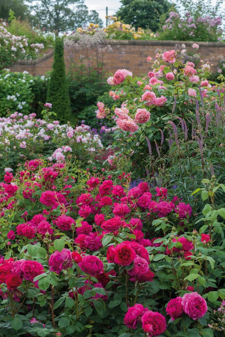 17 Best 1000 images about flowers and gardens on Pinterest