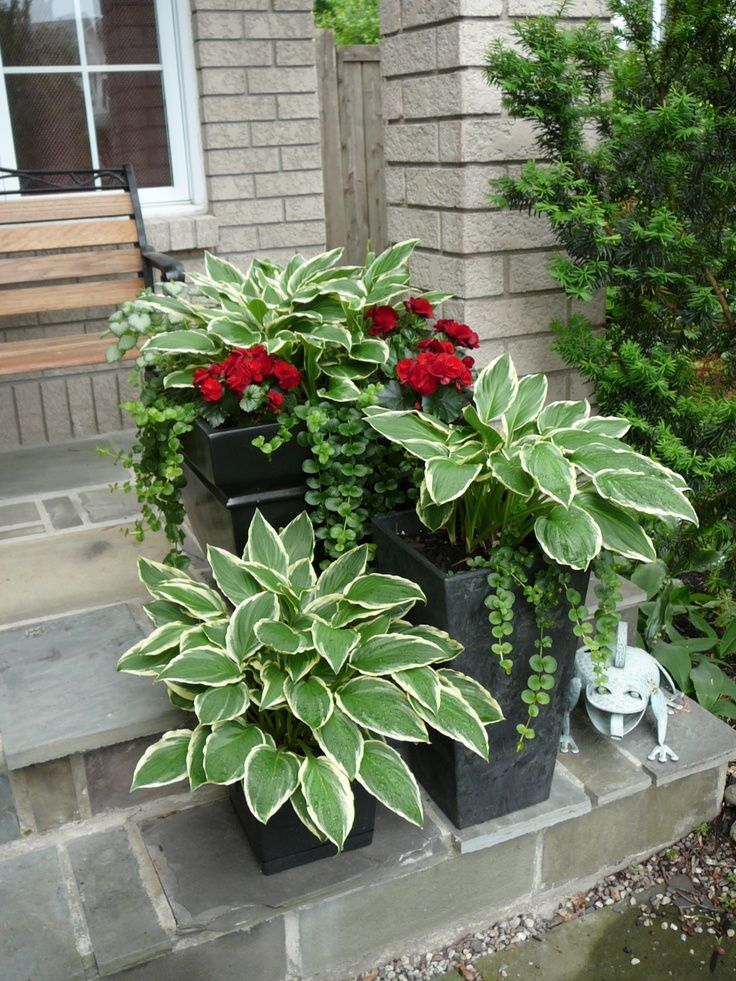 Containers in those shady spots...I love the clean elegant look these gunmetal black containers planted with Host create at this entry. Hosta are excellent container plants.  Add begonia or New Guinea Impatiens and trailing plants to finish off the look.