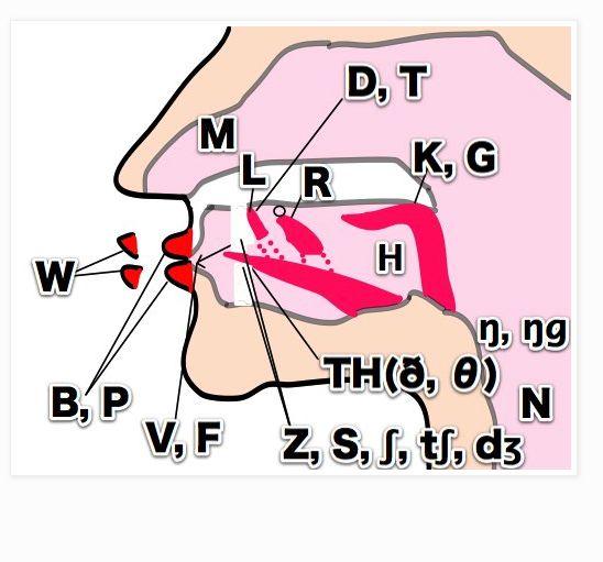 International Phonetic Alphabet - Consonants & Stress