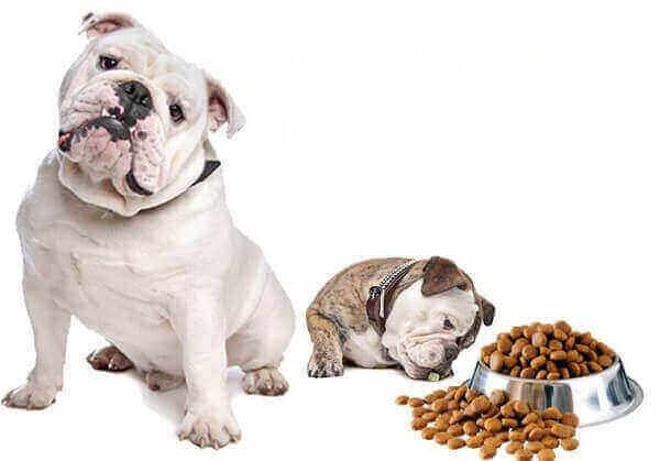 What Can Dogs Eat And Not Eat Can I Feed My Dog Human Food