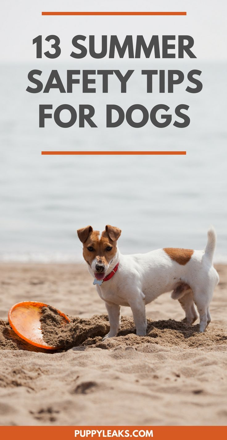 Summer brings a few potential hazards to our pets. Keep these tips in mind to help keep your dog safe this summer.