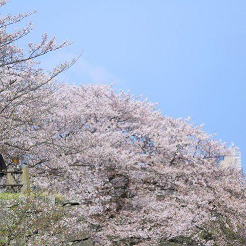 【miho.rwedding】さんのInstagramをピンしています。 《▷▷▷ 前撮り☑︎ . 前撮りの予約にスタジオフィールへ📷💓 . 季節にはこだわりなかったんやけど 桜シーズンの写真を見たらすっごく綺麗で🌸 彼が『好きなようにしていいよ☺️』 って背中押してくれたので プラス料金だけど桜の季節にすることに♡ 舞鶴公園でこんな写真撮りたい! . 🌿庭園で白無垢 🌸桜の下で色打ち掛け 🐠海辺でウェディングドレス 着ることになりました☝🏻️💕 やばーい!わくわくするー!🌸 . お値段も最高で、式場で同じようにしたら プラス10万近くするみたい😤💭 ここ、かなり節約ポイントになりました💸💕 . スタジオフィールの方はとても面白くて 挙式会場を聞かれたので答えると 『QUANTICっぽい〜〜!!!! お二人見てたらQUANTICでしっくりくる!』 って言われた😳なんか嬉しい!!笑 . とりあえず前撮りまで148日🗓 一生残る写真だし、ダイエット頑張る🐷ぶひ . #プレ花嫁 #福岡花嫁 #前撮り #桜 #2017秋婚 #ちーむ0917…