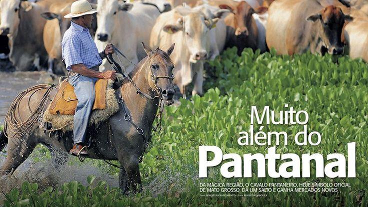 Pantaneiro horse (Bogtrotter horse) Foto: Ernesto de Souza/Ed. Globo