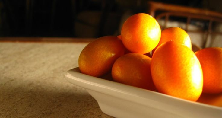 kumquat fruit -  little 'gold gem' of the citrus family