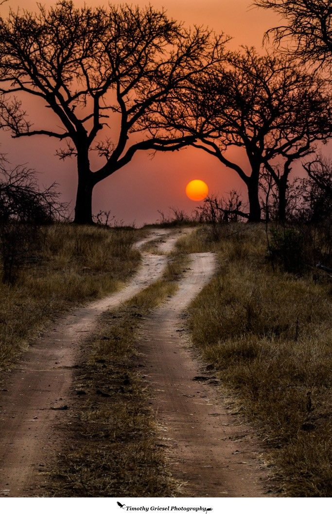 Pathway to the sun - Kruger National Park, Africa (by Timothy Griesel)