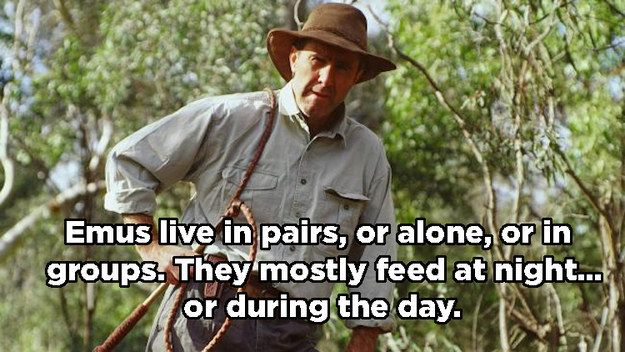 There is a fine art to monitoring animals. | 17 Important Aussie Lessons According to Russell Coight