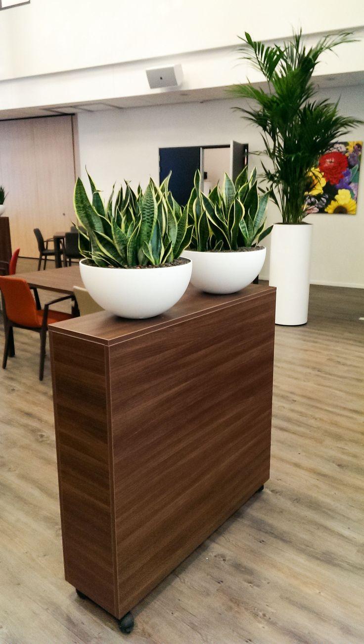 25 beste idee n over kantoorplanten op pinterest binnenplanten weinig licht planten en - Decoreer zijn professionele kantoor ...
