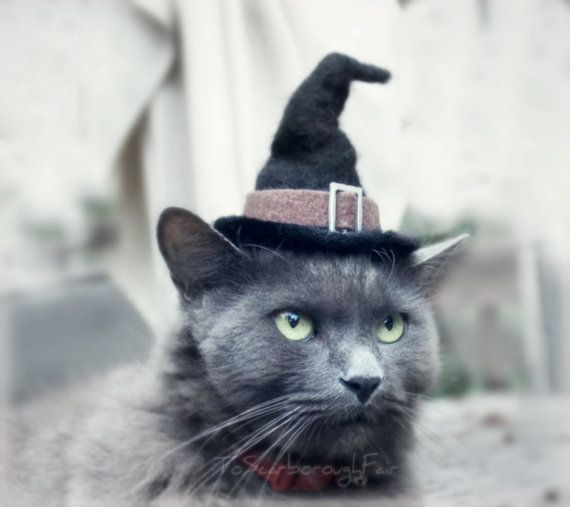 Cat Costume  Witch Hat  Hissy Witch by ToScarboroughFair on Etsy, $32.00...LOLLLL!!!!