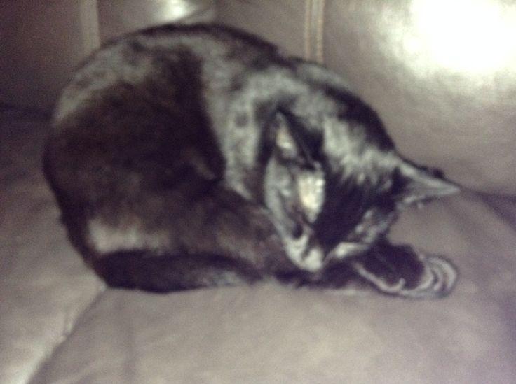 My adorable kitty, Prada. ❤️ her!