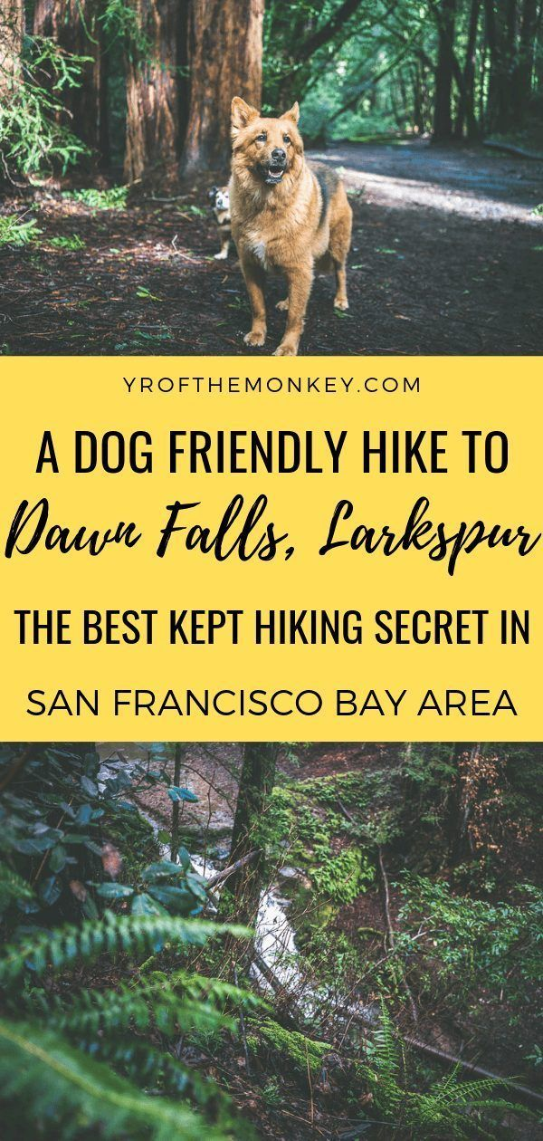 Dawn Falls Trail Larkspur The Best Kept Hiking Secret Of Bay Area