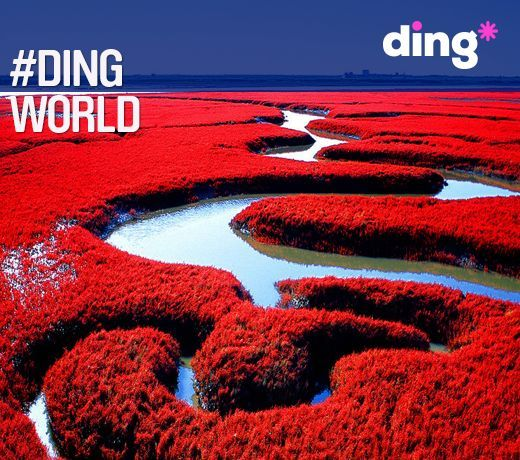 Where in the world do you think this beautiful nature reserve is found? Only a small section of this breathtaking place is open to the public to view. #dingworld