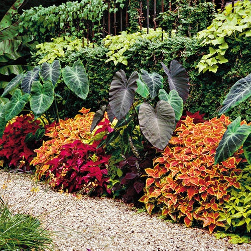 tropical flower bed ideas 28 images 17 best images