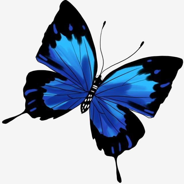 Illustration De Dessin Anime De Papillon Bleu Noir Clipart Papillon Papillon Noir Bleu Papillon Volant Fichier Png Et Psd Pour Le Telechargement Libre Cartoon Butterfly Anime Butterfly Blue Butterfly
