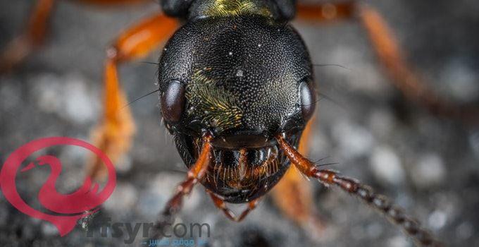 تفسير رؤية حلم النمل فى المنام للامام الصادق 2019 2 Animals Insects