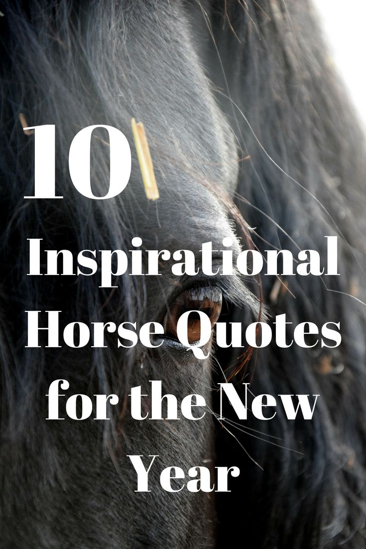 10 Inspirational horse quotes to get you motivated for the New Year. It's never too late to start over and improve yourself.