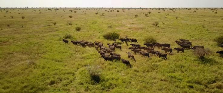"""Drone Görüntüleriyle Güney Afrika'nın Eşsiz Doğal Güzelliği """"Drone Görüntüleriyle Güney Afrika'nın Eşsiz Doğal Güzelliği""""  https://yoogbe.com/doga/drone-goruntuleriyle-guney-afrikanin-essiz-dogal-guzelligi/"""