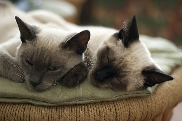 Pin By Charlene Catherine On Smitten Kitten Cat Mom Cats Cat Care