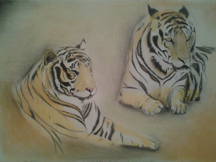 Thai Tigers - Polychromos Colour Pencil with soft pastel background - $350.00 - 60 x 40 - FRAMED