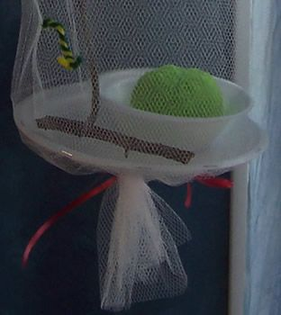 We are going to make this for Zoey's catapillar! So we can watch it turn into a butterfly!