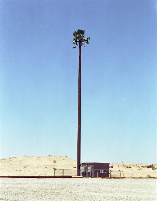 New Trees By Robert Voit