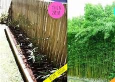 growing natural privacy fences - Bing Images