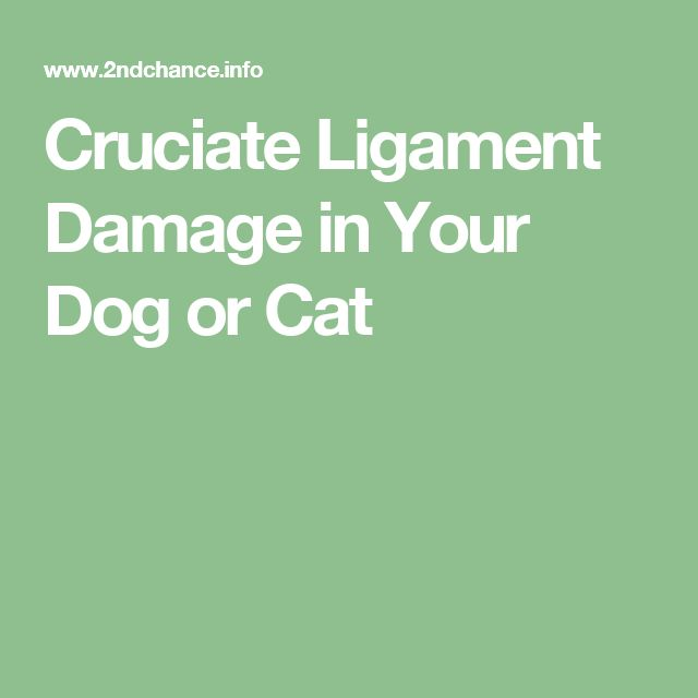 Cruciate Ligament Damage in Your Dog or Cat