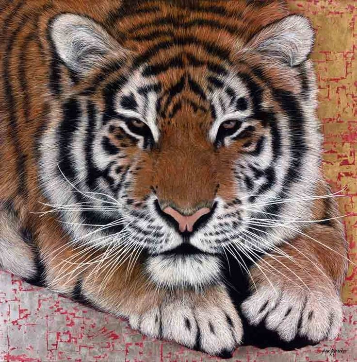 Siberian Tiger, Oil and Gold Leaf on Canvas, 100cm by 100cm, (2015) by Marc Alexander