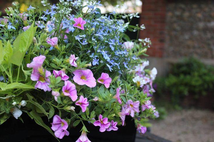 jardini re fleurie livr e domicile adapt e pour un balcon ensoleill pour un balcon fleuri en. Black Bedroom Furniture Sets. Home Design Ideas
