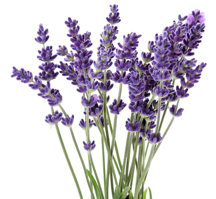 I like the idea of lavender coming out of a tea pot.  Not quite as full as this...maybe 3-5 sprigs