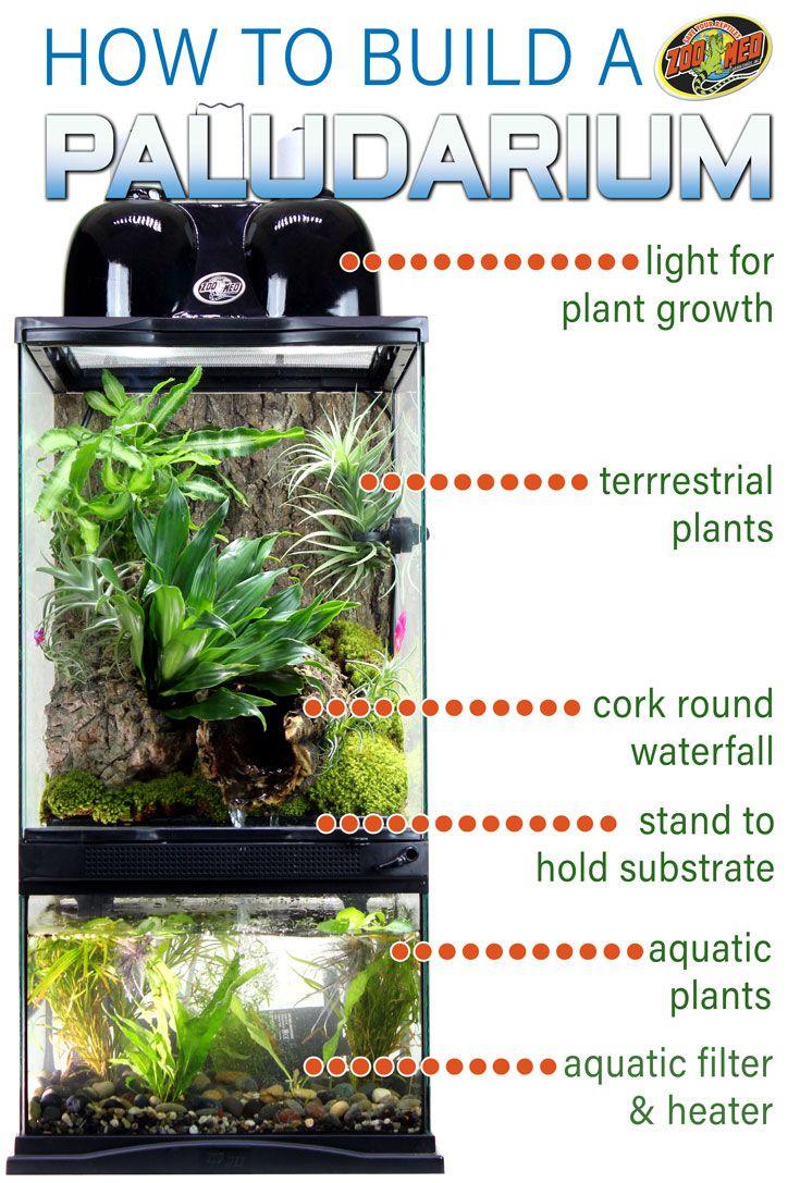 How To Build A Paludarium Paludariums Build A Home For Reptiles
