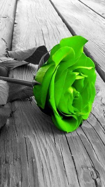 Love Green RoseSplash Of ColorColor PhotographyBlack White