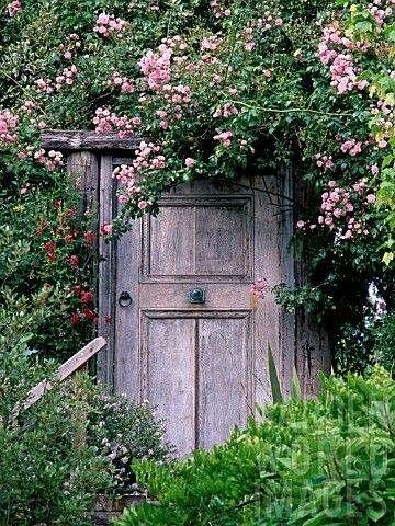 Une porte patinée par le temps entourée d'un rosier ancien