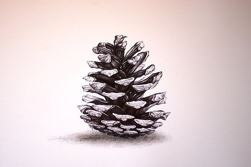 Pine Cone -- ideas for print making