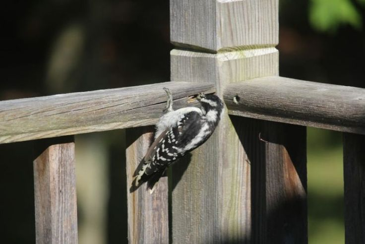 how to stop birds from building a nest in my awning