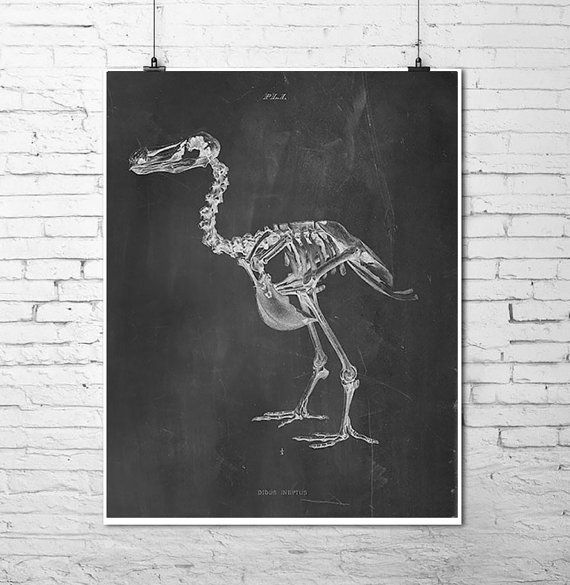 dodo bird skeleton chalkboard chalk art print scientific