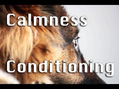 How To Train Calmness in Dogs! (Part I) - YouTube