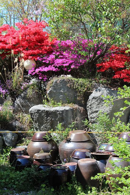 Korean Garden - Azalea, rocks + big pots!