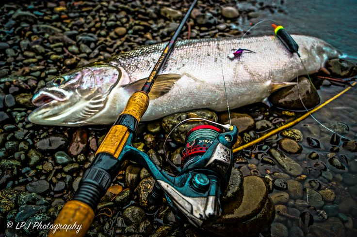 "The Steelhead Special - Shimano Stradic CI4 Spinning Reel paired with the G-Loomis IMX 1262-2C STFR	10'6"" Steelhead Float Rod http://fish.shimano.com/content/sac-fish/en/home/products/fishing-reels/spinning.html #LPJPHOTOGRAPHY #LPJSGUIDESERVICE #GYDELYFE #STEELHEAD #PHOTOGRAPHY #FISHING #OUTDOORS #SHIMANO #GLOOMIS #IMX"