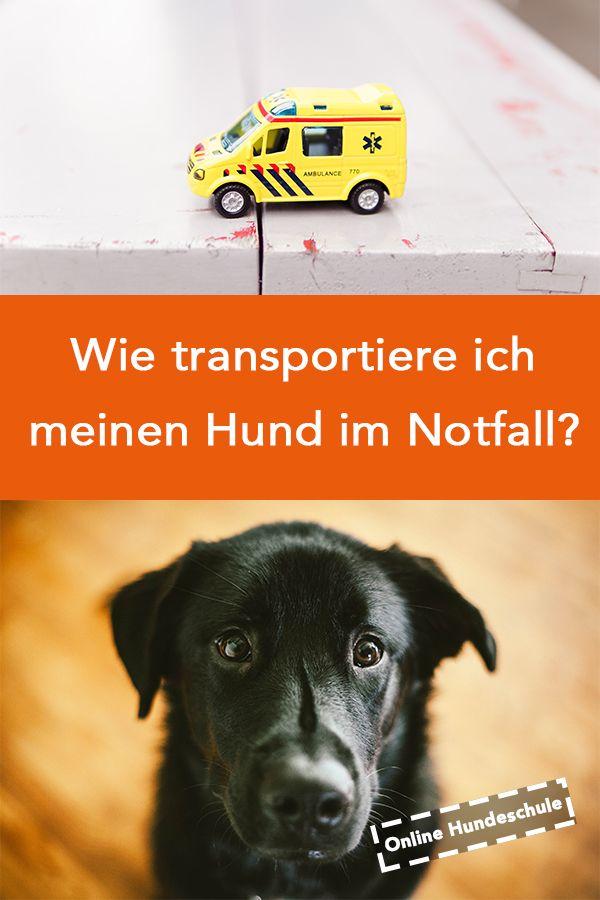 Wie transportierst du deinen Hund im Notfall richtig? Was