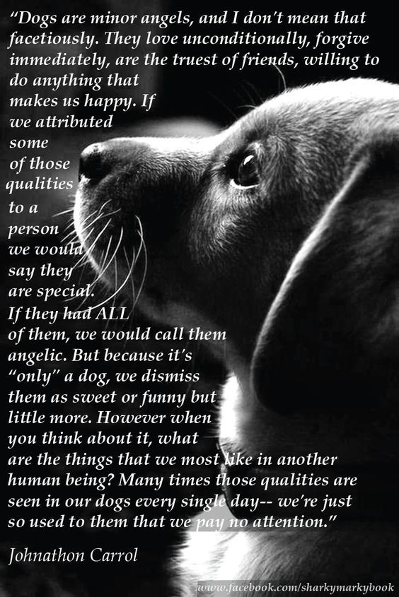 "inspirational quote on dogs from Carroll ""Dogs are angels"