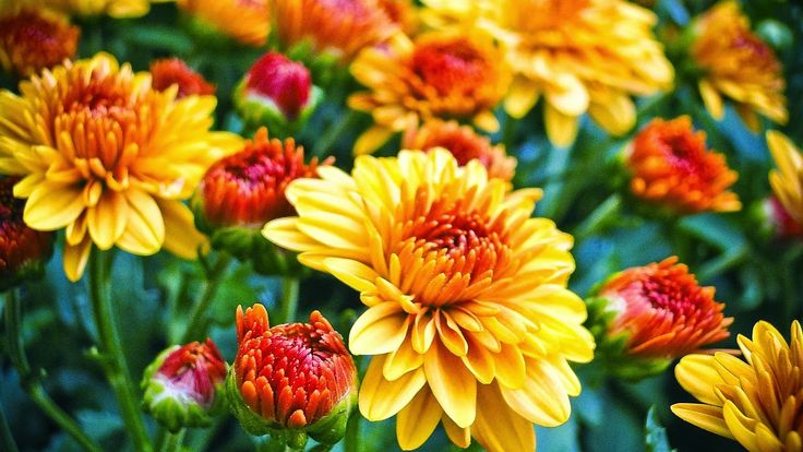 Lovely Mums and a great post. Read more.