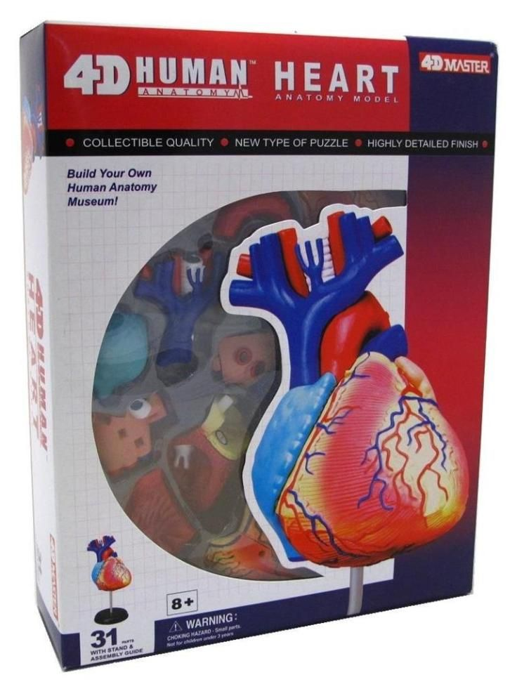 4 D Model Of The Human Heart U0026 Other Cool Valentines Day Gifts For Kids