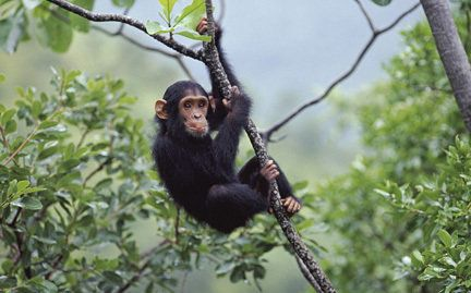 Petition · John Magufuli: Together we can help the Chimpanzees... · Change.org